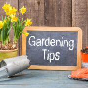 How to prepare and maintain a home garden in Lacey, WA